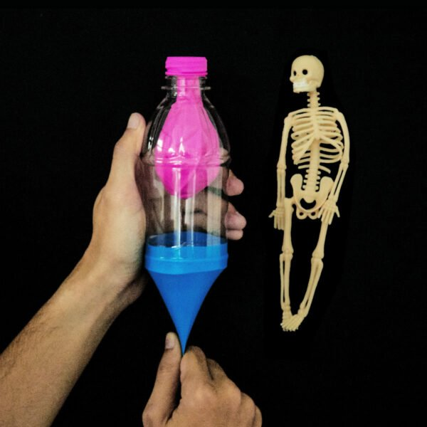 STEM Kit Experiment For Kids At Home – Kit #6 : Lung Kit And Skeleton Model (1)