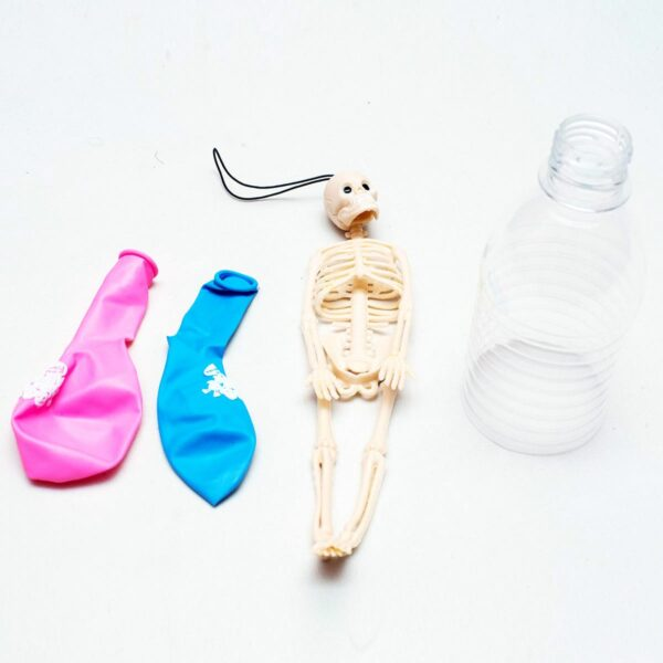 STEM Kit Experiment For Kids At Home – Kit #6 : Lung Kit And Skeleton Model (2)